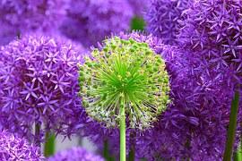 flower-139356__180