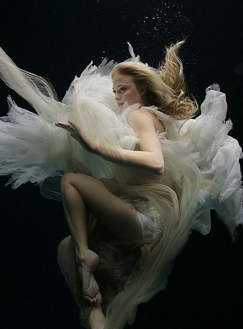 Swan song by Zena Holloway