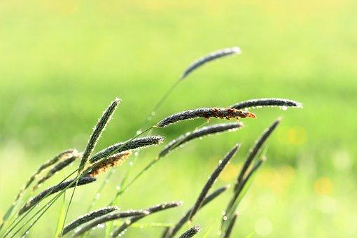 grass-2246134__340