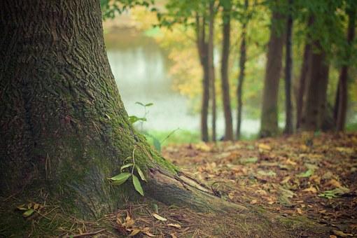 tree-trunk-569275__340